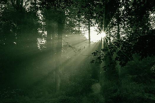 Jacek Wojnarowski - Sunrise in forest