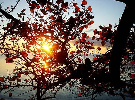 Sea Grape Sunrise by Julie Pappas