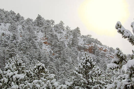 Steve Krull - Sunrise in Snowstorm in the Pike National Forest