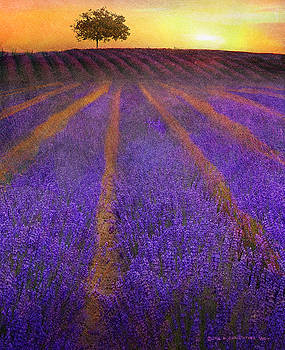 Sunrise Lavender Fields by R christopher Vest