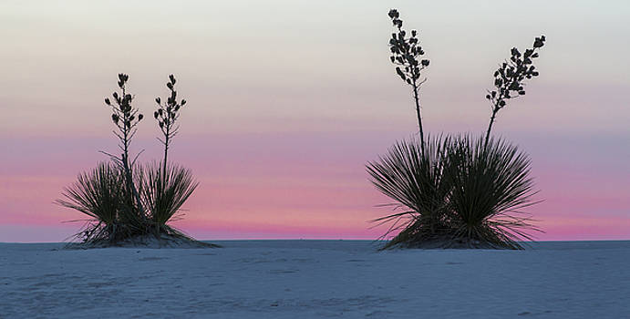 Sunrise Light With Yucca by Focus On Nature Photography