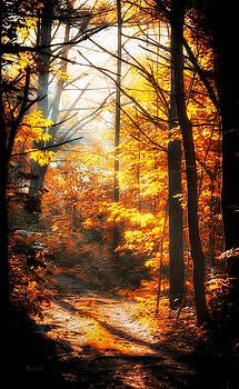 Sunrise Mist Through The Trees by Bob Orsillo