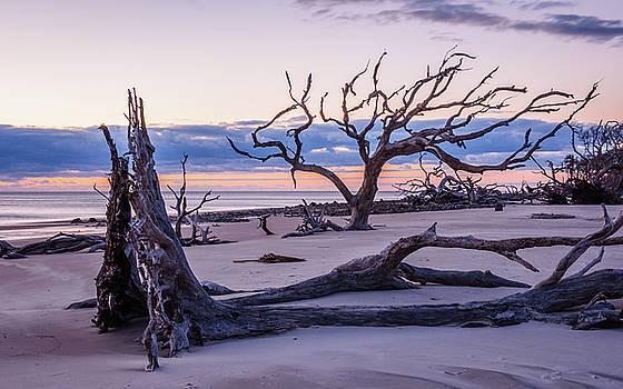 Andrew Wilson - Sunrise On Driftwood Beach