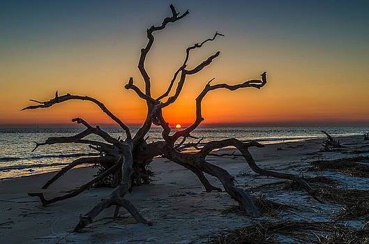 Sunrise On Driftwood Beach by Eric Albright