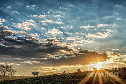 Sunrise on the Farm by Thomas R Fletcher