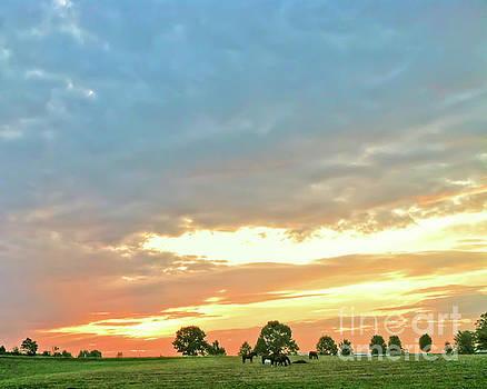 Sunrise on the Horse Farm by Kerri Farley