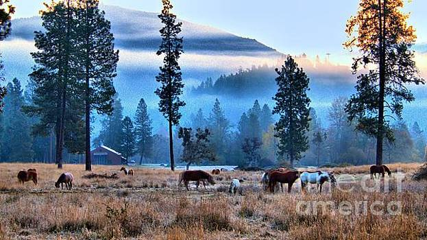 Sunrise On The Range by Julia Hassett