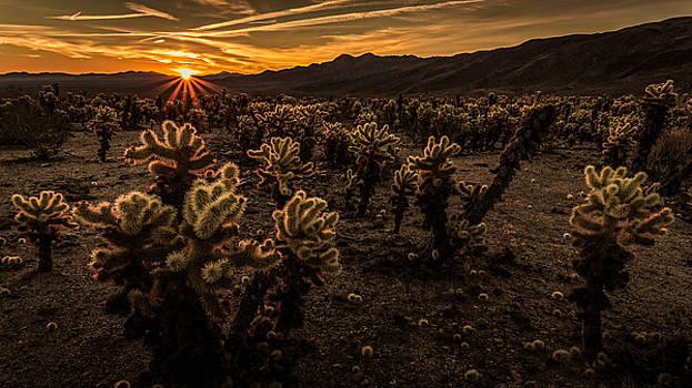 Rick Strobaugh - Sunrise over the Cactus Garden