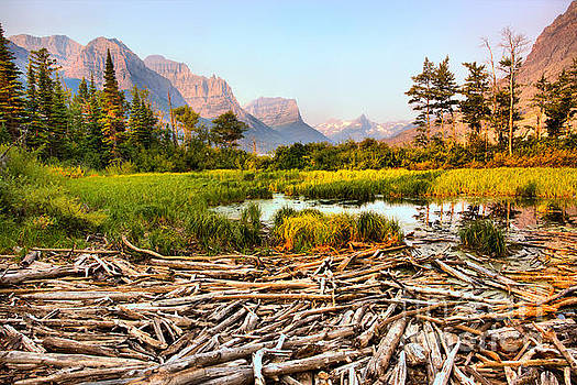 Sunrise Over The Driftwood Wetlands by Adam Jewell