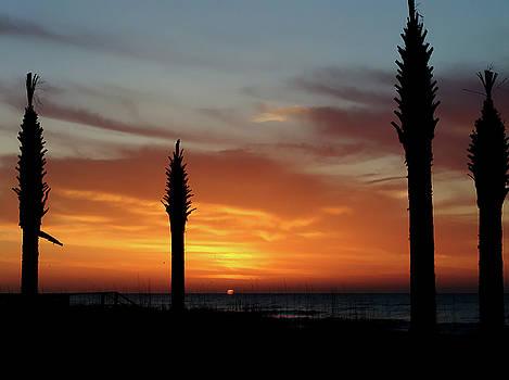 Sunrise Palms by Ree Reid