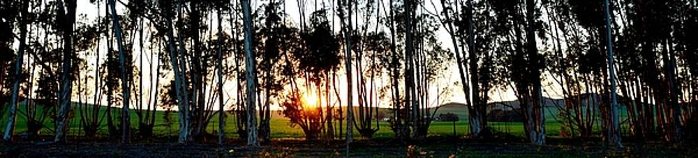 Sunrise Panorama by Werner Lehmann