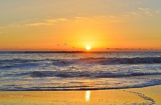 Sunrise Pea Island by Barbara Ann Bell
