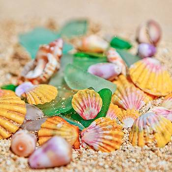 Sunrise Shells by Angelina Hills