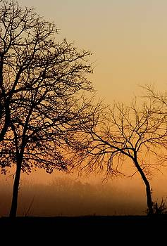Sunrise Silhouette by Risa Bender