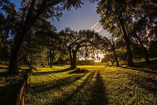 Chris Bordeleau - Sunrise Spanish Moss Shadows