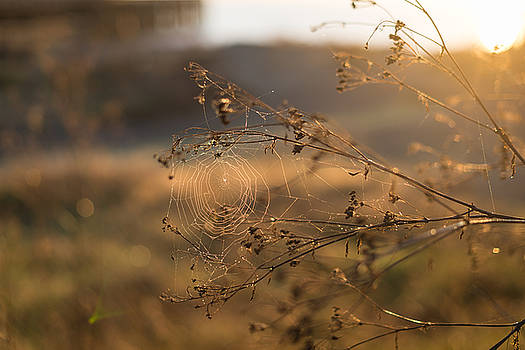 Sunrise Spider Web by Sarah Beth Smith