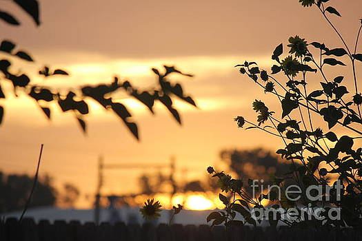Sunrise Sunflowers by Sheri LaBarr