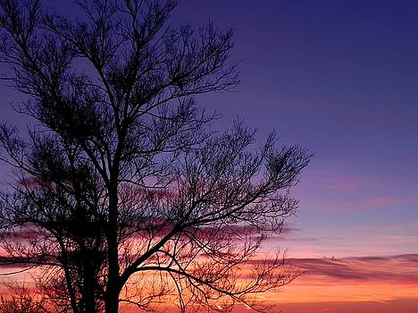 Sunrise, Sunrise by Adrienne Petterson