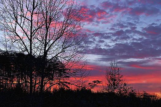 Sunrise through Bare Trees by Jim Allsopp