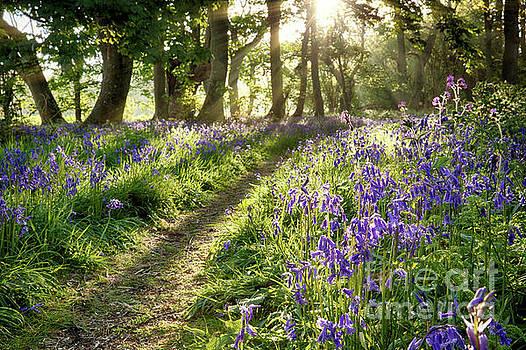 Sunrise through bluebell woodland by Simon Bratt Photography LRPS