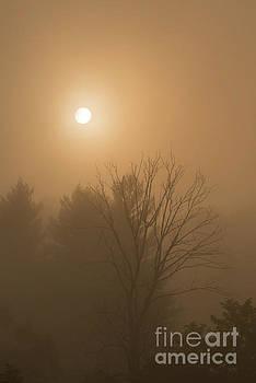 Sunrise through Mountain Mist by Thomas R Fletcher