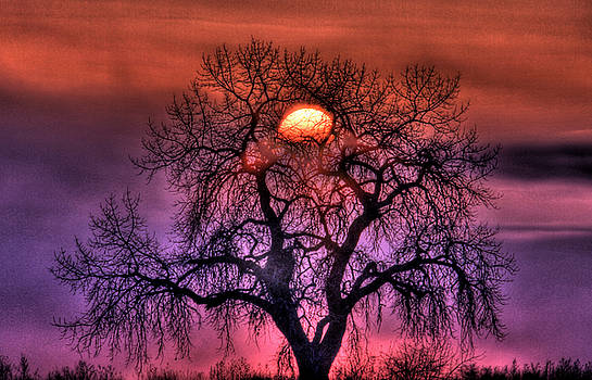 Sunrise Through The Foggy Tree by Scott Mahon