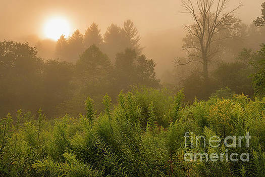 Sunrise through the Mist by Thomas R Fletcher