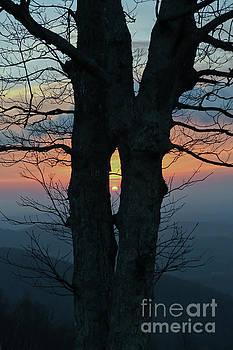 Sunrise Through The Tree - Blue Ridge Parkway  by Kerri Farley