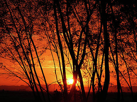 Sunrise Through the Trees by  Graham Taylor