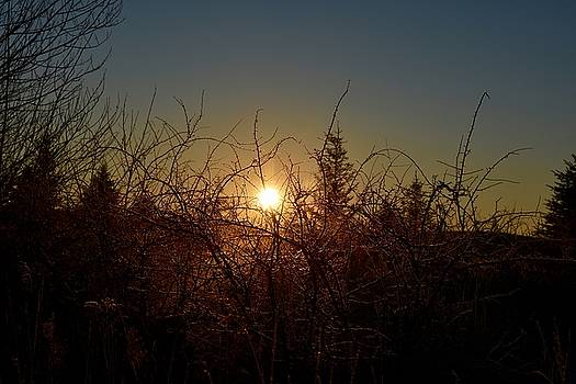 Sunrise Thru The Brush by Dacia Doroff