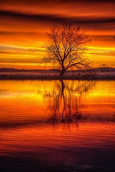 Sunrise Tree by Fiskr Larsen