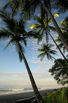 Reimar Gaertner - Sunrise with coconut palms on the beach at Carate Osa Peninsula