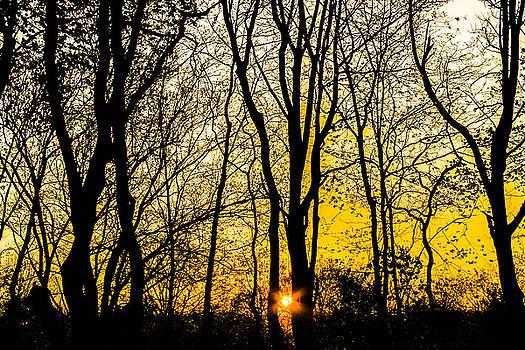 Sunrising through trees by Kathleen McGinley