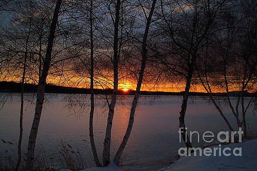 Sunset and Birches by Lennie Malvone