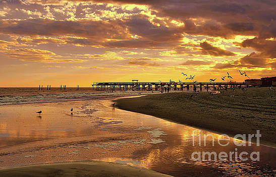 Sunset And Gulls by Kathy Baccari