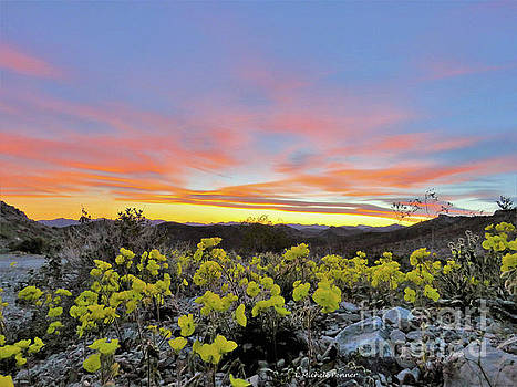 Sunset and Primrose by Michele Penner