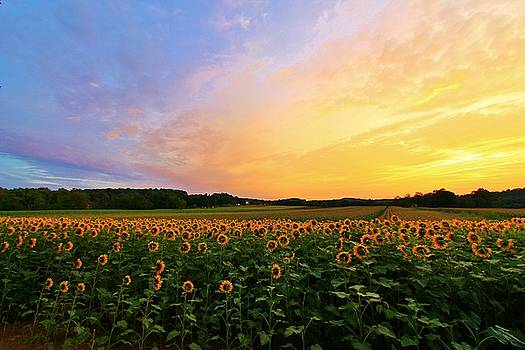 Sunset and Sunflowers by Catie Canetti