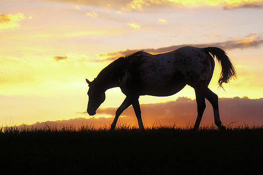 Sunset Appy by Bryan Smith