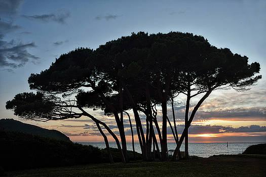 Sunset at Baratti Pines by Joachim G Pinkawa