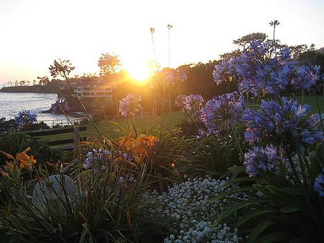 Sunset at Laguna Beach by Renee Antos