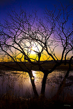 Sunset at the Pond by Andrea Lawrence