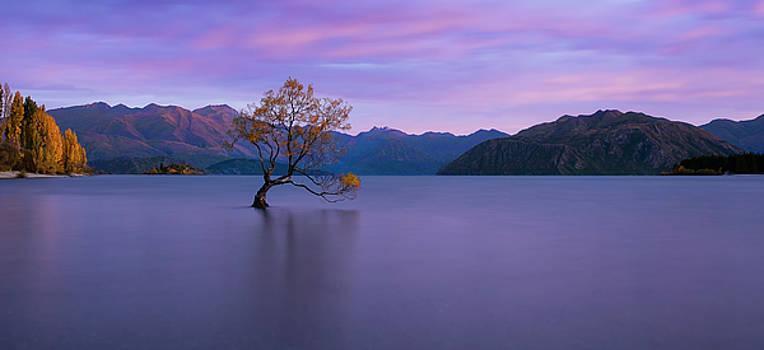Sunset at Wanaka by Renee Doyle