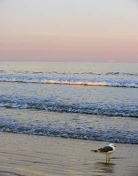 Ann Tracy - Sunset Atlantic Beach Florida