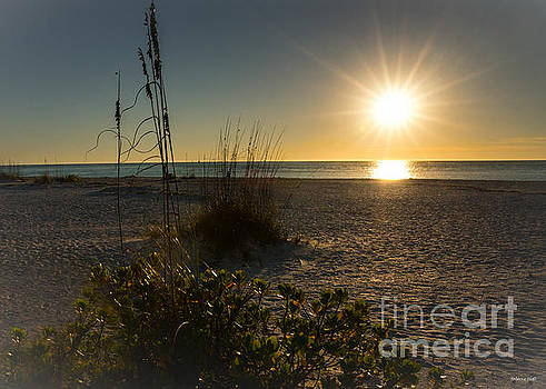 Sunset Beach by Rebecca Hiatt