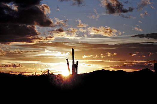 Sunset behind a Saguaro by David Kehrli