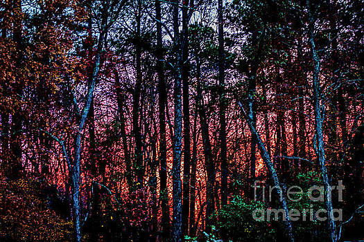 Doug Berry - Sunset Behind Trees 0493T