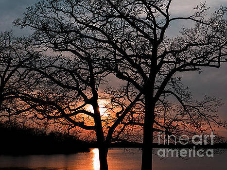 Sunset Behins the Trees by Paul Wheatley