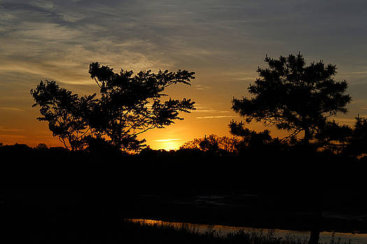 Sunset Between The Trees by Stacie Fernandes
