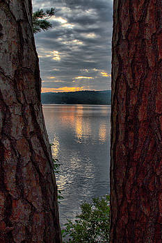 Sunset Between Trees  by Betty Pauwels