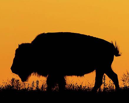Rob Graham - Sunset Bison 2